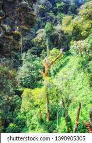 Vines, creepers and moss thrive under the dense canopy of the tropical rainforest in Nyungwe National Park, Rwanda.