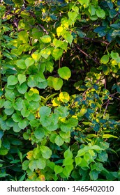 Vines and leaves at golden hour