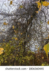 Vines and leaves in wooded area in autumn