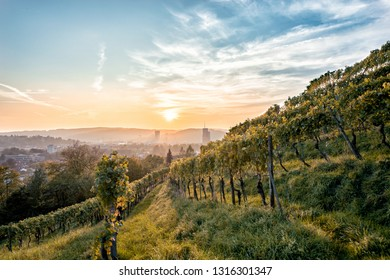 Vines on a hill in the town of Winterthur in Switzerland at sunset