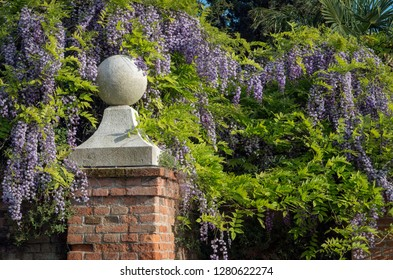 Vines of wisteria surround a brick gate post in the Spring - taken in a park in Venice, Italy