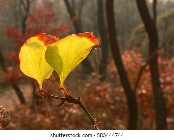 vine,tendril,autumn
