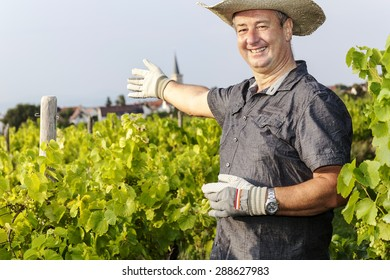 in the Vineyard