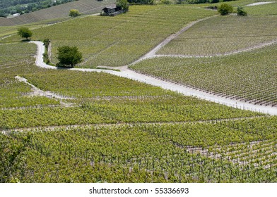 Vineyard I