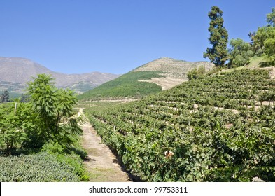 Vineyard in Aconcagua Valley Chile