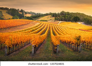 Vineyard in the Adelaide Hills, South Australia