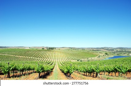 Vineyard at Alentejo region, Portugal.