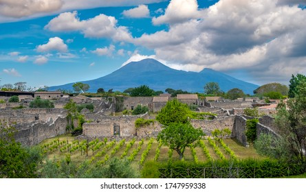 Vineyard in Ancient ruins of Pompei (Scavi di Pompei), Naples, Italy