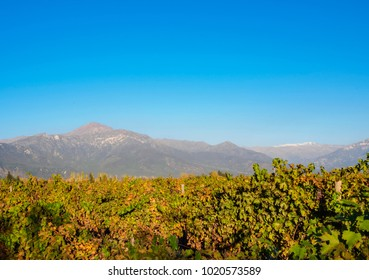 Vineyard with Andes in the background, Pirque, Santiago Metropolitan Region, Chile