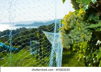 Bird Netting Images, Stock Photos & Vectors | Shutterstock