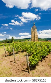 vineyard at Arbois, Department Jura, Franche-Comte, France