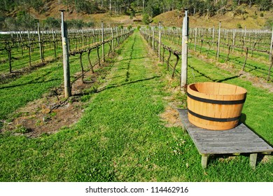 Vineyard in Australia with rows of grape vines with no foliage.