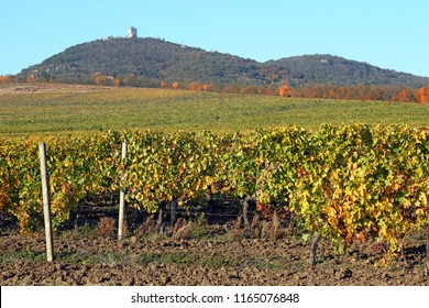 Vineyard in autumn landscape Vrsac Serbia
