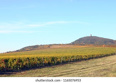 Vineyard autumn season landscape Vrsac Serbia