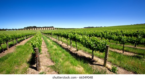 Vineyard in the Barossa Valley, South Australia