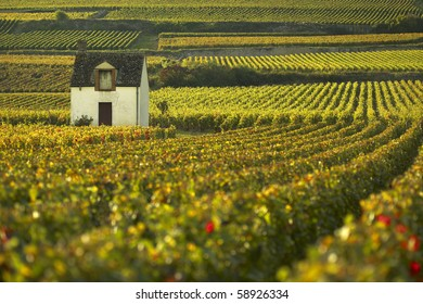 Vineyard of Beaune, Burgundy