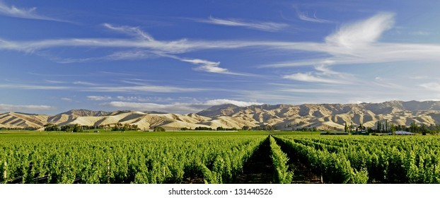 Vineyard Blenheim