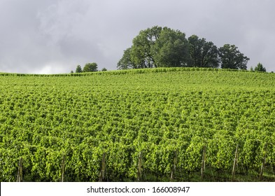 Vineyard bright green under gray rain clouds: Break in afternoon rain illuminates Willamette Valley wine country in northern Oregon, USA