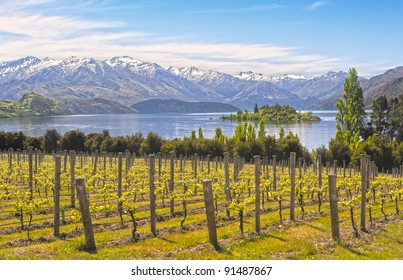 Vineyard by the Lake, New Zealand