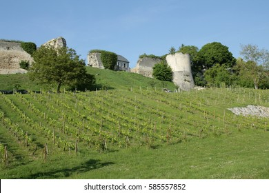 Vineyard and castle at Coucy le Chateau in Aisne, Picardie in north of France