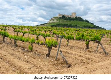 Vineyard with Castle of Penafiel as background, Valladolid Province, Castile-Leon, Spain