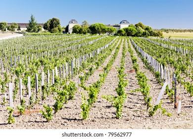 vineyard and Chateau Calon-Segur, Saint-Estephe, Bordeaux Region, France