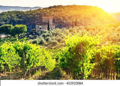 vineyard in the Chianti region,Tuscany,Italy