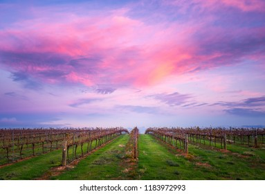 Vineyard in the Clare Valley, South Australia