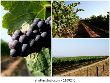 Vineyard Collage
