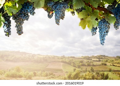 Vineyard countryside field landscape and grape on branch closeup border. Wine making and winery product design background.