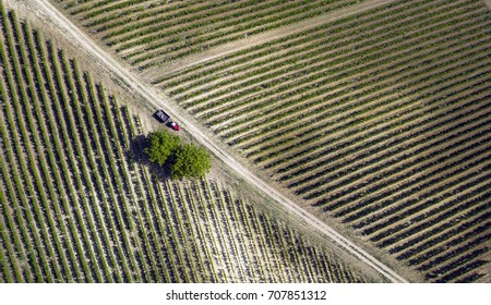 Vineyard in Croatia