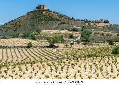 Vineyard with Davaillo castle as background, La Rioja, Spain
