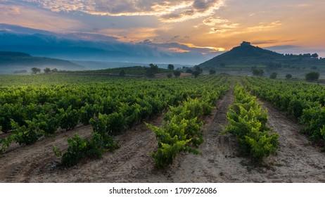 Vineyard with Davalillo castle as background at sunrise, La Rioja, Spain