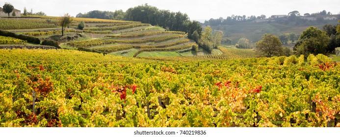 Vineyard field landscape on a sunny day landscape, large area