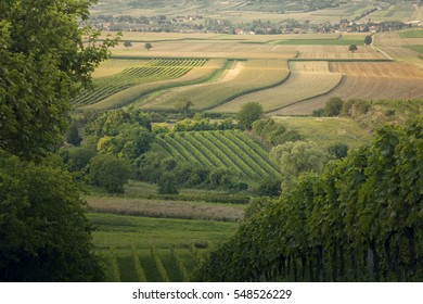 Vineyard and fields