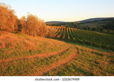 Vineyard fields in Tuscany