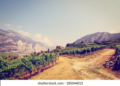 The Vineyard at the Foot of the Italian Alps, Instagram Effect