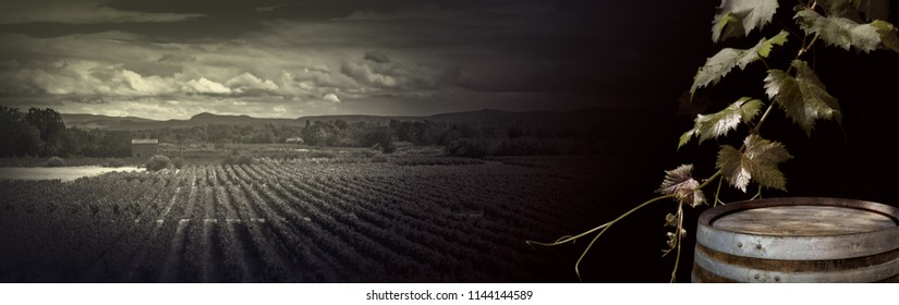 Vineyard with fresh leaves and old wine barrel for your alcohol drink concept on black background. Wide angle template with grape vine for wine festival or winery tour in retro style.