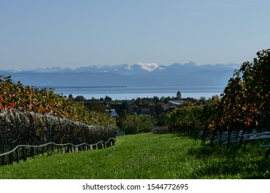 Vineyard at german side of lake Bodensee, near the town Hagnau Immenstadt. DE Germany. 15th Oct.2019
