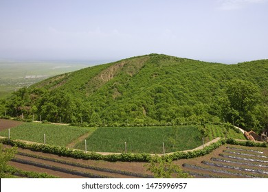 Vineyard green hills landscape view, Alazani valley, Georgia