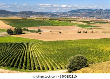 Vineyard, Haro as background, La Rioja, Spain