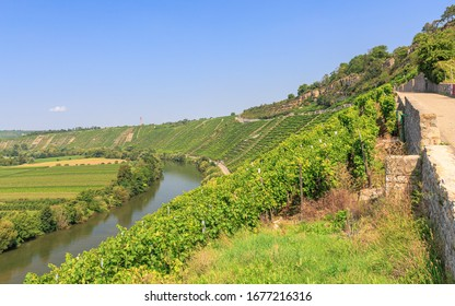 Vineyard Hessigheimer Felsengärten over the Neckar river in the Stromberg area in Baden-Wuerttemberg