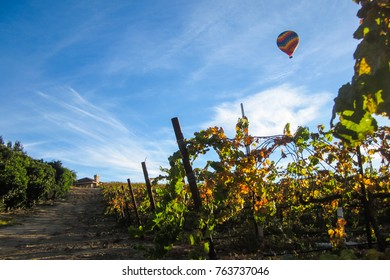 vineyard with hot air balloon in the sky