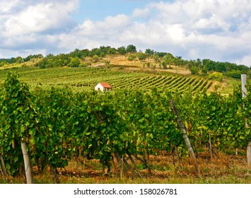 Vineyard House Plant Detail Landscape Tokaj Hungary
