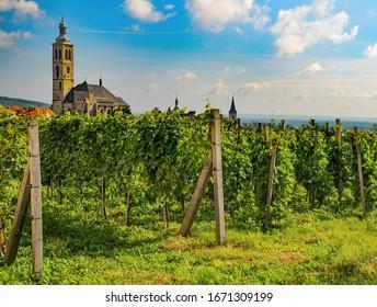 Vineyard in Kutna Hora, Czech Republic. Tower of St. James church on backgrouind. UNESCO World Heritage Site - Shutterstock ID 1671309199