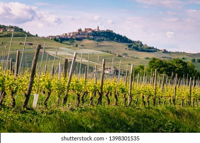 Vineyard with La Morra village on the top of the hill. View from Barolo in springtime. Viticulture, Langhe, Piedmont, Italy, Unesco heritage. Barolo, Dolcetto, Barbaresco red wine.