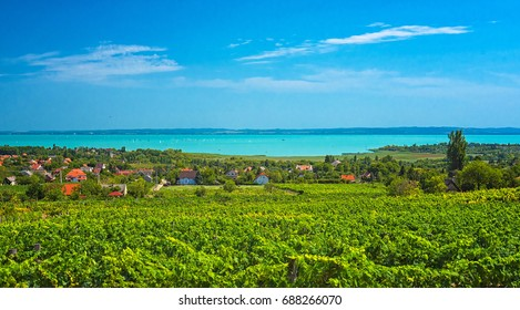 Vineyard at lake Balaton, Hungary