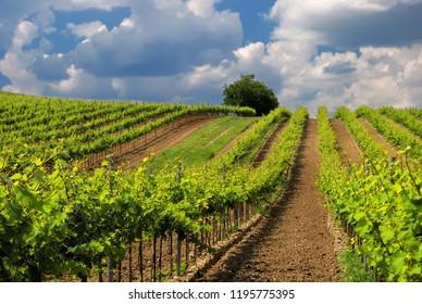 Vineyard land in Spring, Hungary