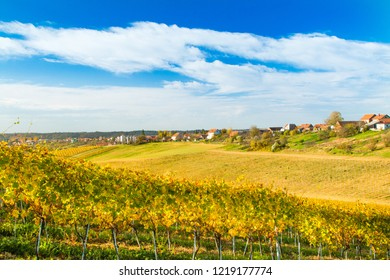 Vineyard landscape in autumn in countryside of Daruvar, Croatia