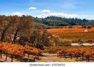 Vineyard landscape in autumn with fall colors. Location: California wine country